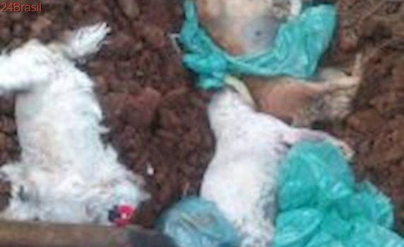 Mortos a pauladas e asfixiados, 14 cães são jogados em terreno baldio em Palmas