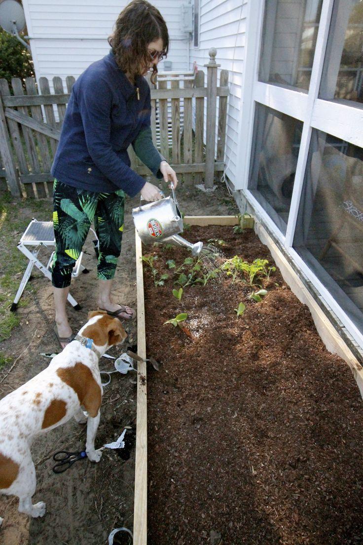 Diy raised bed garden patio life style pinterest raised garden