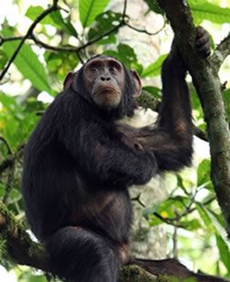 """With Rwanda safari, tourists get a chance to see the physical beauty of this great country also known as the land of a """"Thousand Hills"""" , cultures, and appreciate nature at its best."""