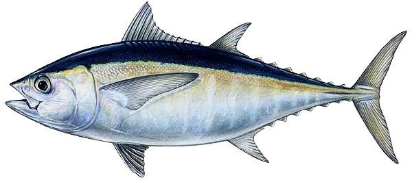 How to Make Easy Tuna Rice Salad