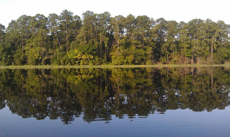 Texas Parks and Wildlife shared Texas Parks and Wildlife - Huntsville State Park's photo.  When your eyes need a break from the screens, enjoy views like this one from Huntsville State Park: State Park S, Park S Photo, State Parks, Eye, Texas Parks