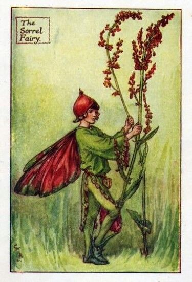 Sorrel Flower Fairy » Flower Fairy Prints- Vintage Fairy Prints by Cicely Mary Barker for sale