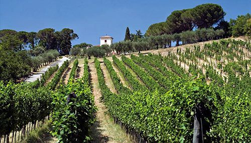 Tenuta Cavalier Pepe tasting by Vinologue Miquel Hudin #italy #irpiniawines