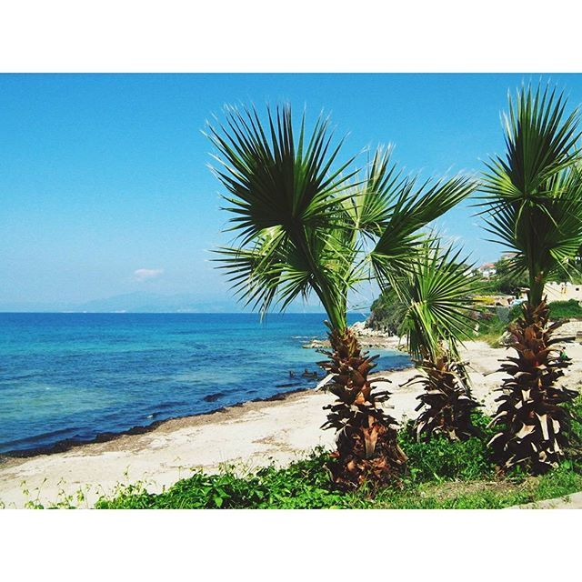 Palm trees in paradise ♡#destinationany #anywheretraveler #travelblogger #traveler #travelgram #instatravel #palmtrees #aegeansea #beachlovers #island #naturelovers #green #summer #summermemories #summerholiday #beautifuldestinations #beautifulsea #bluesea #takemetoturkey #turkey #kusadasi #welivetoexplore #ig_romania #igromania #igersromania