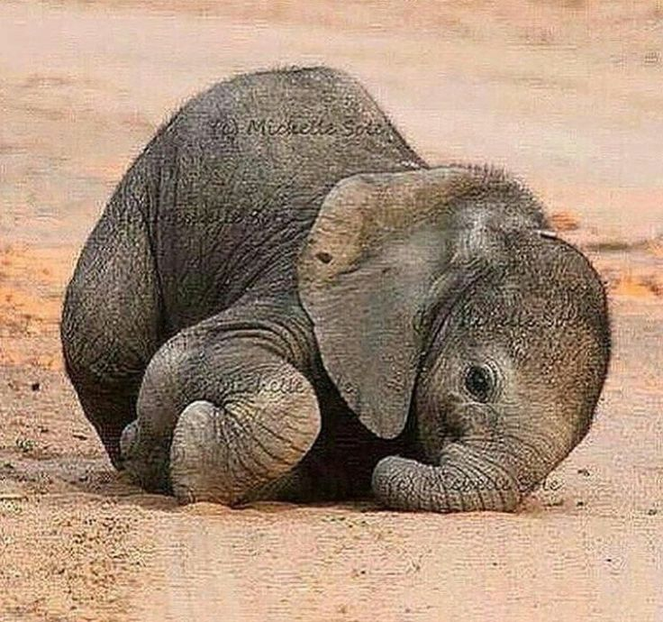 Baby elephant, photo by Michelle Sole