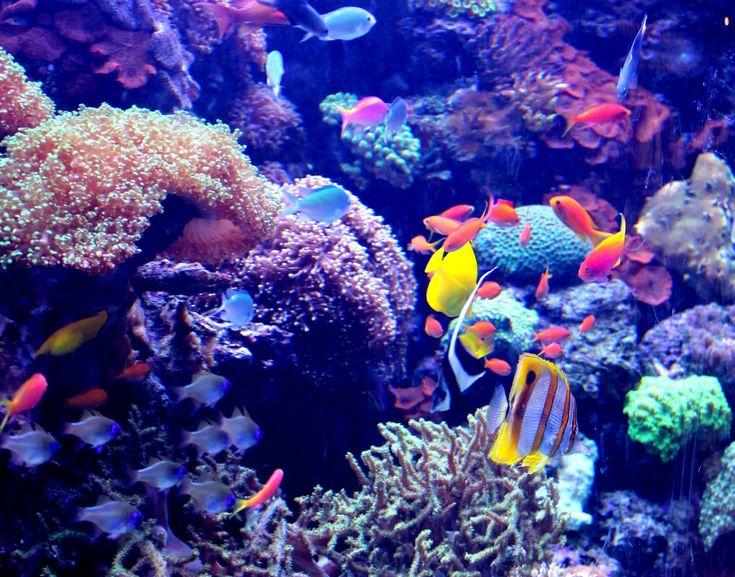 under the ocean | Under the Sea | Stop. Look. Shoot.