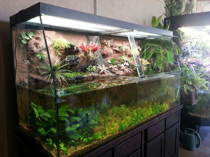 1302 best images about paludarium on pinterest crested for Fish tank frogs