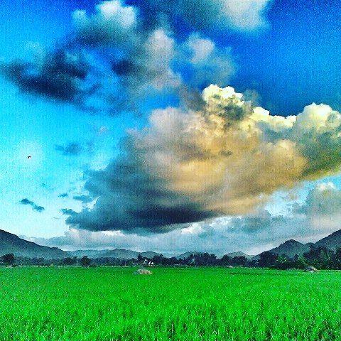 kabartrenggalek - Mendung merendah di tengah sawah Salamrejo #clouds #sky #nature #landscape  #sawah# #trenggalek  #kabartrenggalek by clik_clus
