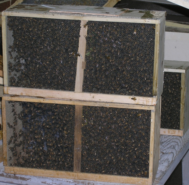 Nine Pounds Of Honeybees