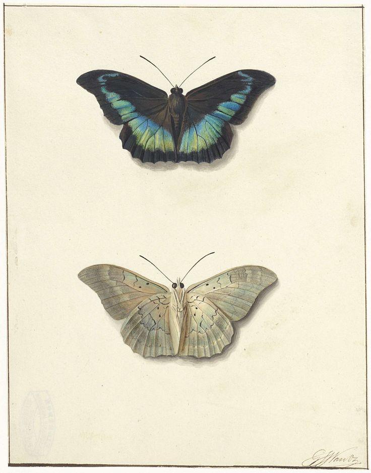 laclefdescoeurs:  Boven- en onderaanzicht van een vlinder, Georgius Jacobus Johannes van Os