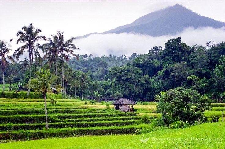 Jatiluwih - Bali - Indonesia