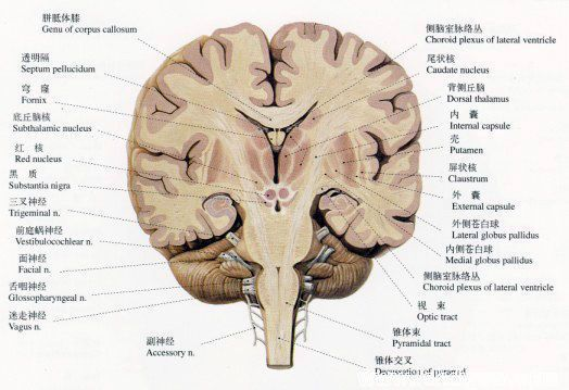 an understanding of cerebral palsy and epilepsy Epilepsy is known to have a higher association with cerebral palsy 15–60%   prenatal factors may lead to better understanding of the cause of epilepsy in cp.