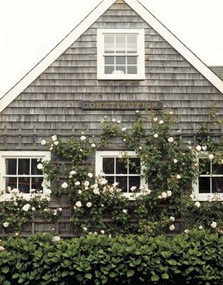 cottage: White Flowers, Beaches House, White Rose, Capes, Climbing Rose,  Glasshous, Cottages, Nantucket, Small Cabins