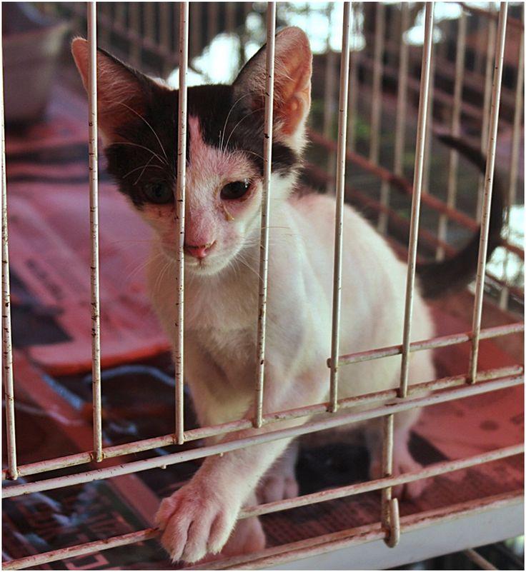 Kitten in animal shelter,Holon