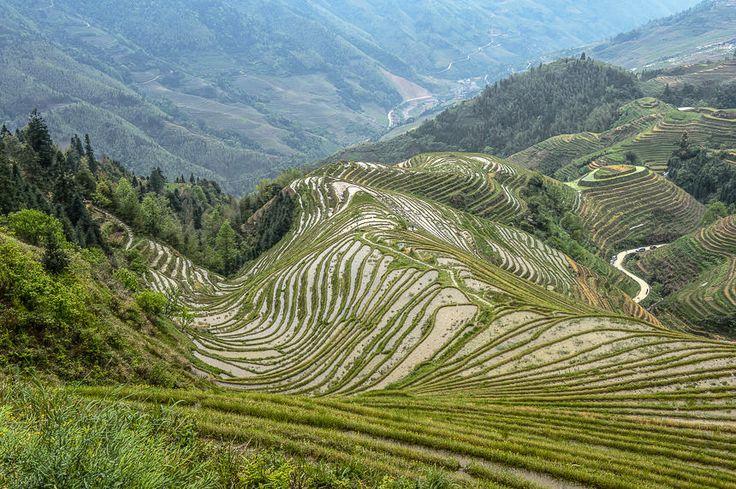 Rice Fields in Yunnan, China