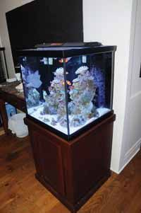 Tips for Nano Reef Aquarium Success