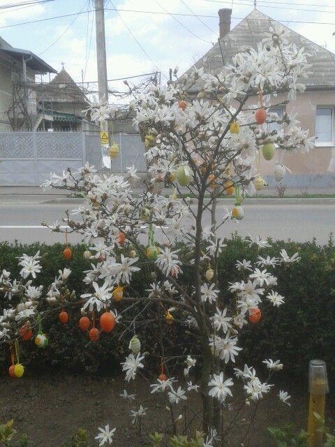 Easter.. Mikica faja :)