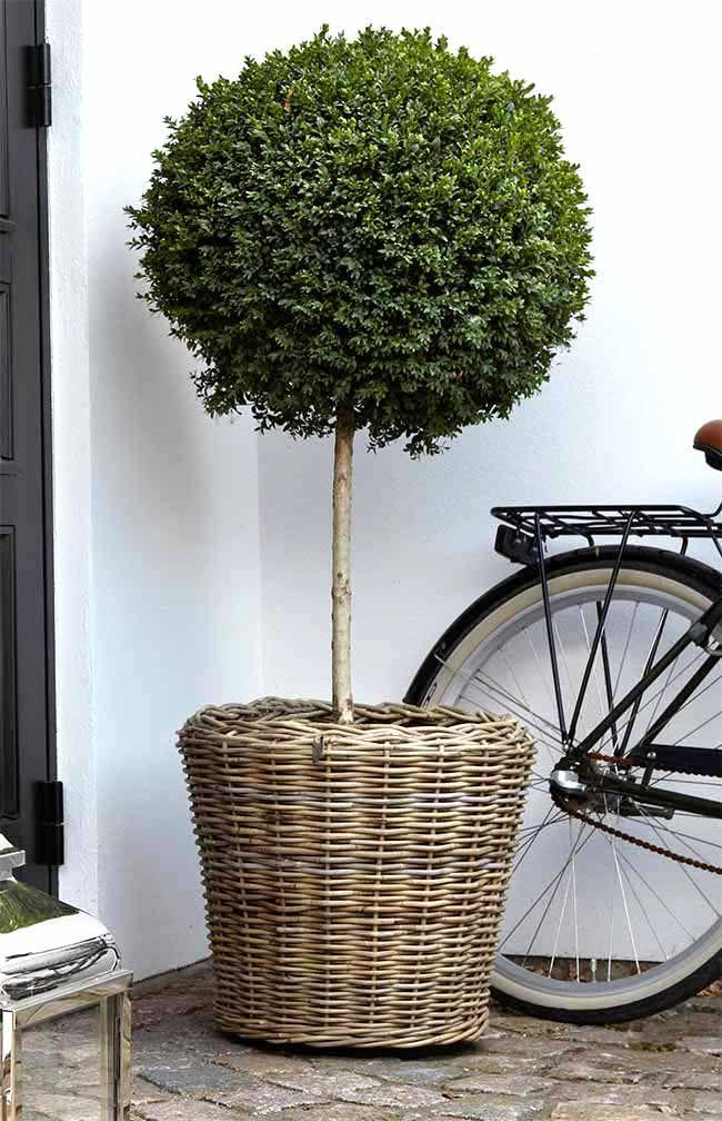 Die besten 25+ Pflanzkübel rattan Ideen auf Pinterest | moderne ...