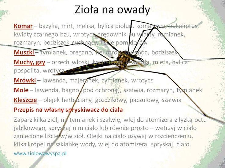 Zioła-na-owady