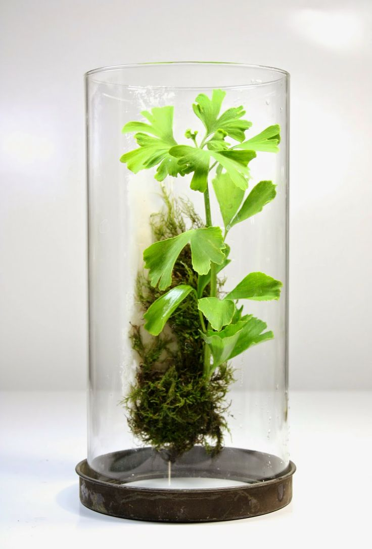 214 best 0 terrariums 4 sanity images on pinterest | do it