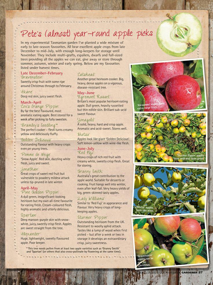 Pete's (almost) year-round apple picks | Organic Gardener Magazine Australia