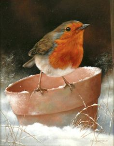 Carl Whitfield robin