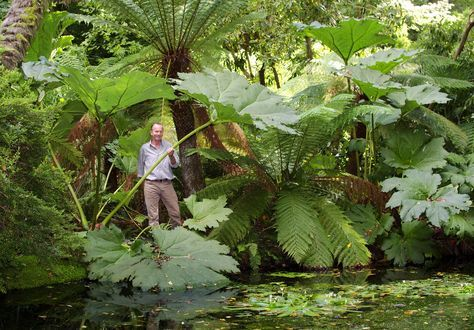 """""""Would that I had room for enormous leaved plants (and lily pond)""""...or in my case, a non-desert climate. So beautiful."""
