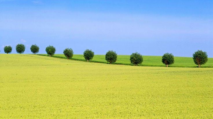 Swedish Fields Wallpaper 3  #SwedishFieldsWallpaper #SwedishFields #nature #wallpapers