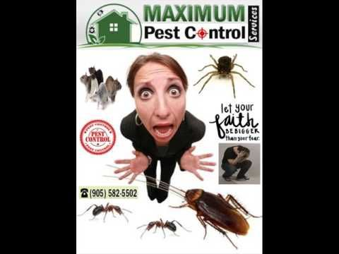 Suspecting Mice? Mississauga mice pest services http://ift.tt/1eIZPl4 (905) 582 5502 Affordable Experts in Friendly Mice Removal & Burlington Residential Pest Control Inspection.  Pest control is the procedure of annihilating or limiting an extensive range of undesirable pest rodents of all kinds and insects from places where people stay or work for example homes offices schools pantries commercial buildings warehouses. Pests are generally exterminated or killed by using specialized…