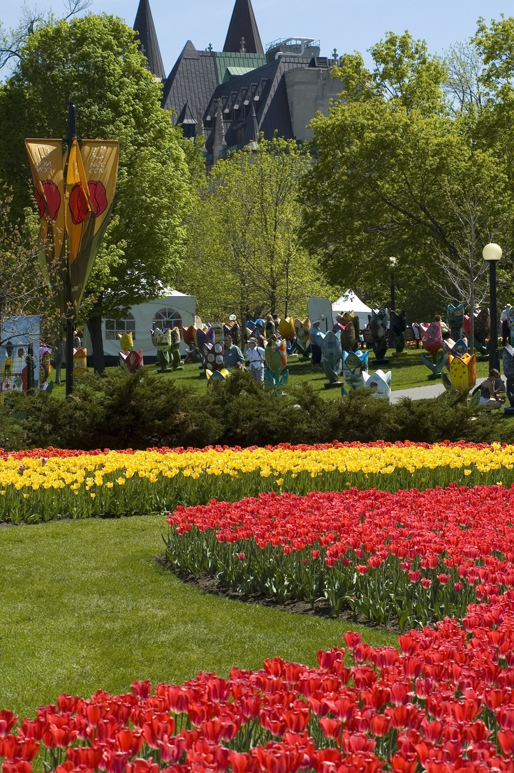 Tulips in bloom at Major's Hill Park during the Canadian Tulip Festival, every May in Ottawa.