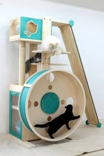 Perfect hamster wheel for exercising cats with catabetes