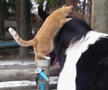 Cat Loves Horse