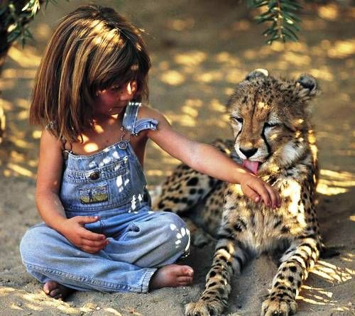 Les photographies d'un lien incroyable entre humains et animaux sauvages
