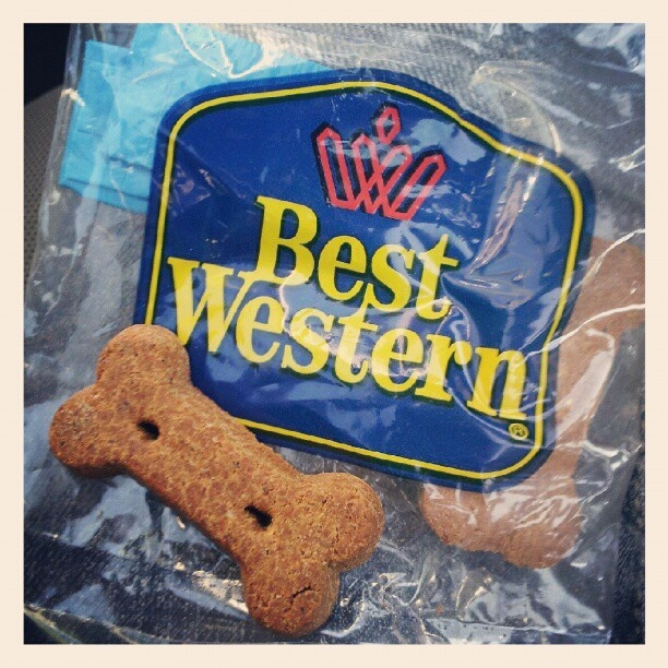 Love to take your dog on vacay?  Best Western Hotels are pet-friendly, check em out!