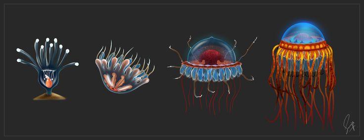 Atolla JellyFish by Saniya Aslam
