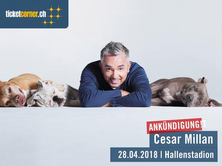 Cesar Millan, der weltberühmte Hundeflüsterer aus Amerika, kommt am 28. April 2018 ins Hallenstadion Zürich! Tickets bei Ticketcorner.