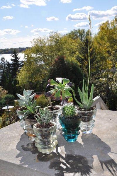 Insulator succulent garden. Cool idea and I have lots of insulators!