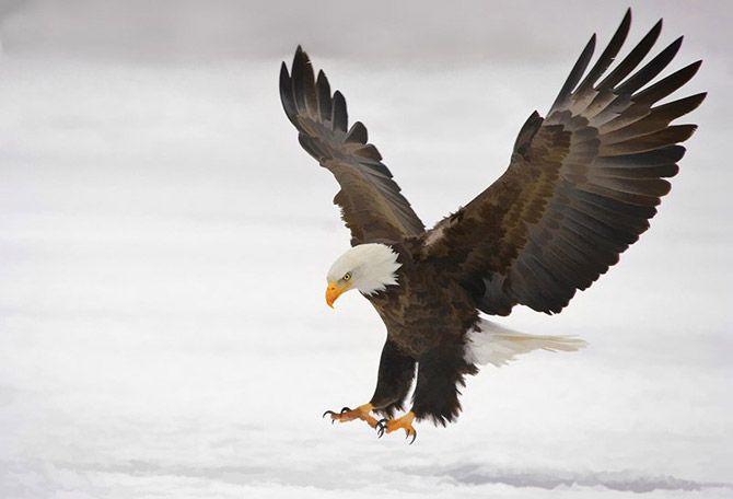 Фотографии птиц Кенна Кристенсена (Kenn Christensen) | Fresher - Лучшее из Рунета за день!