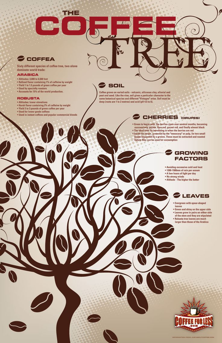Learn about the two main species of coffee tree and their optimal growing conditions.