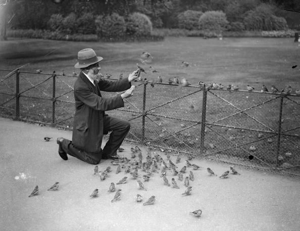 Image result for old picture feeding birds Hyde Park