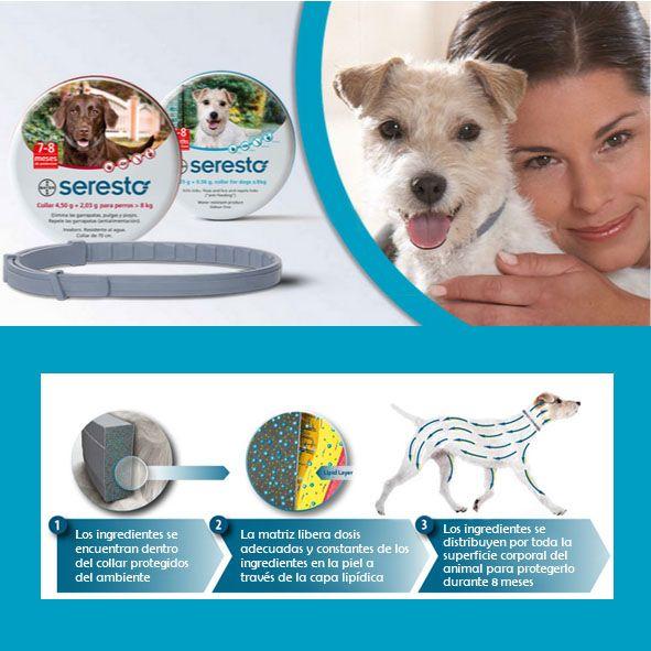 Así actúa el collar #Seresto, eficaz contra #pulgas y #garrapatas  http://seresto.es/es/seresto-para-perros/como-utilizar-seresto/seresto-de-un-vistazo/ #desparasitacion #parasitos #perros #gatos #mascotas
