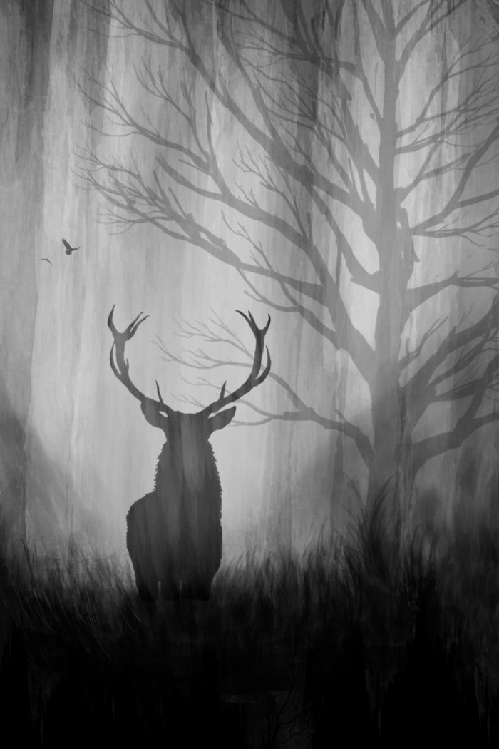 132 best stag art images on pinterest deer deer for White and black paintings