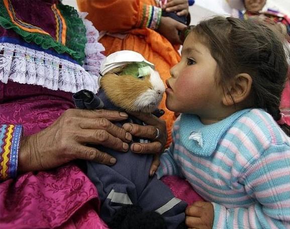 Cuy (guinea pig) | Peru | Pinterest | Festivals, Guinea ...
