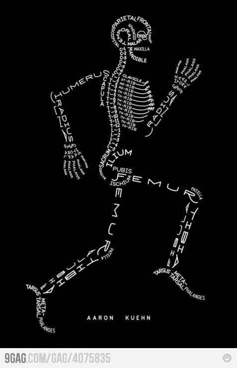 Bones of the body!