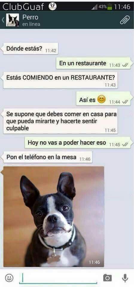 Jajajajaja WhatsApp perro