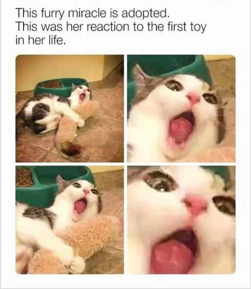 Memes divertidos para animarte en un mal día