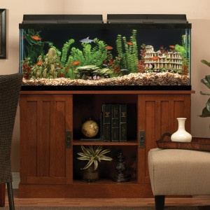 50 gallons is a good starter size future fish tank for 50 gallon fish tank dimensions