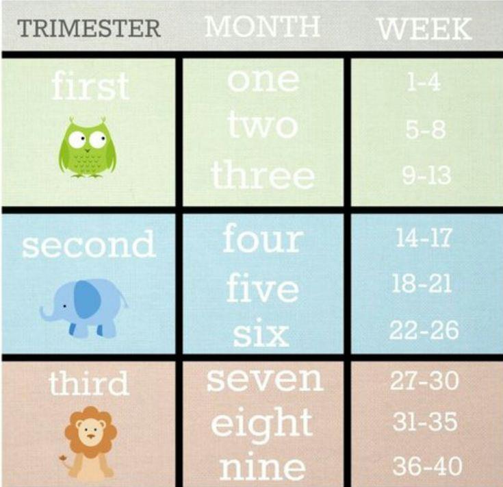 Best 25+ Pregnancy calendar ideas on Pinterest Weekly pregnancy - confirmation email templatebaby chart