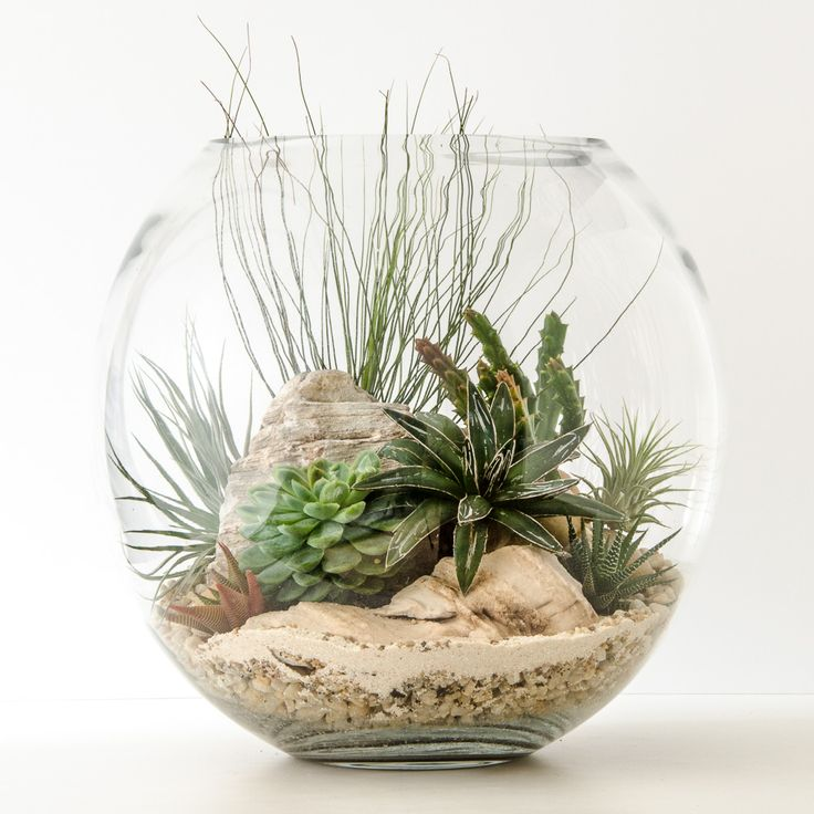 Best 25 air plant terrarium ideas on pinterest airplant terrarium terrarium diy and - Fabulous flower stand ideas to display your plants look more beautiful ...