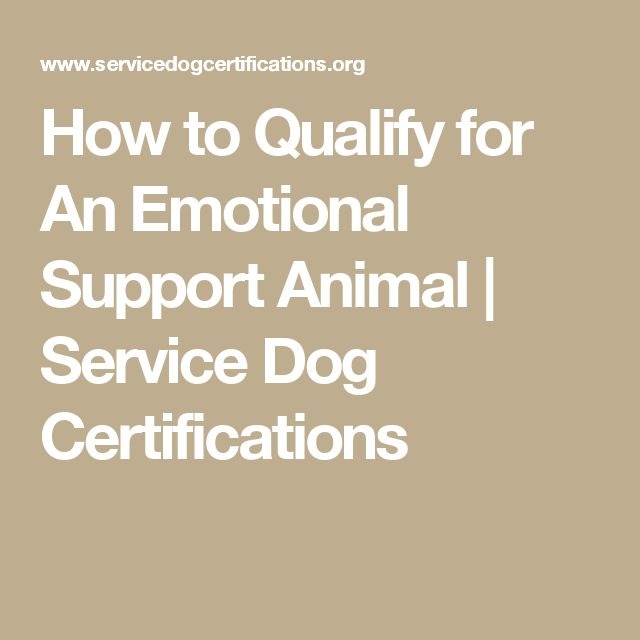 How to Qualify for An Emotional Support Animal | Service Dog Certifications
